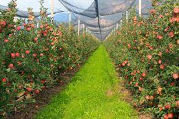Produrre Frutta