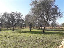 Terreno agricolo 1500mq